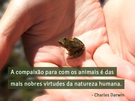 A compaixão para com os...