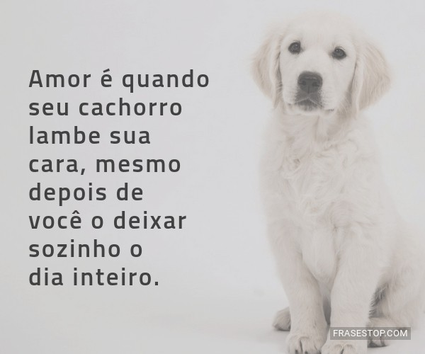 Amor é Quando Seu Cachorro Lambe Sua Cara Mesmo