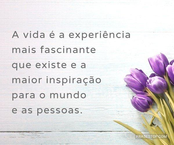 A vida é a experiência...