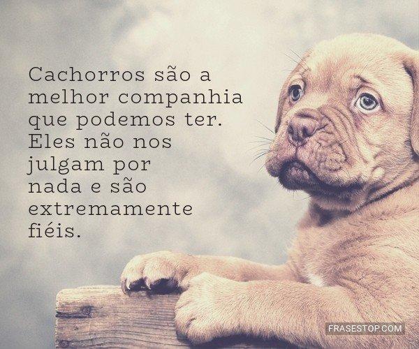 Cachorros são a melhor...