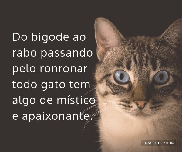 Do bigode ao rabo...