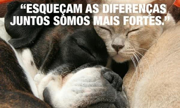 Esqueçam as diferenças....