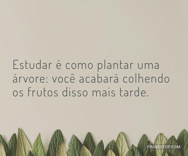 Estudar é como plantar...