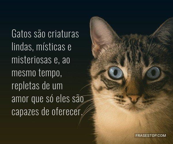 Gatos são criaturas...