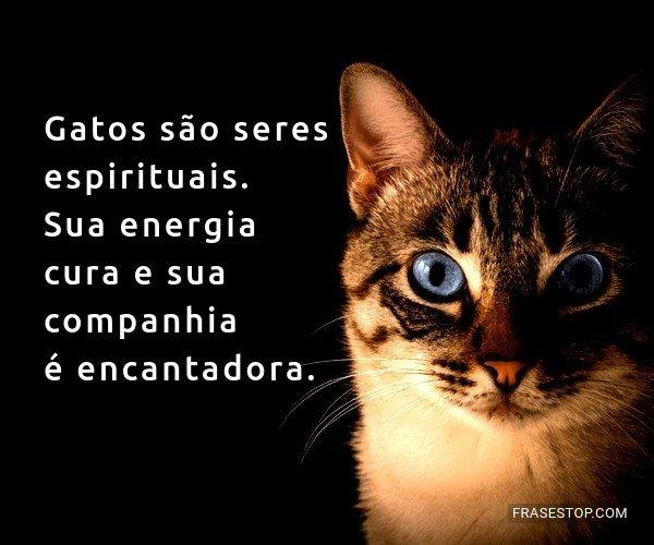 Gatos são seres...