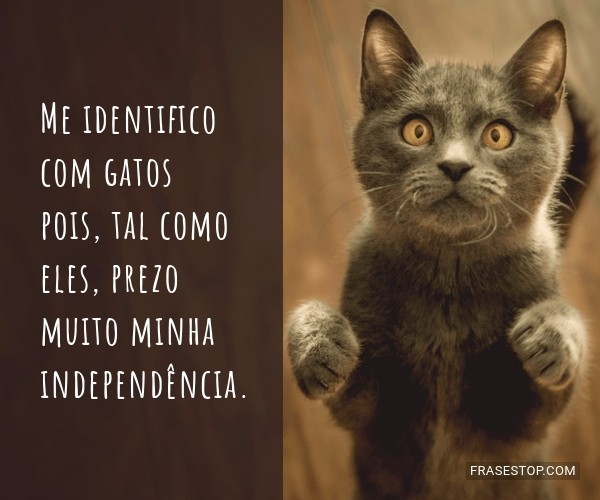 Me identifico com gatos...