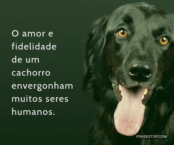 O amor e fidelidade de um...
