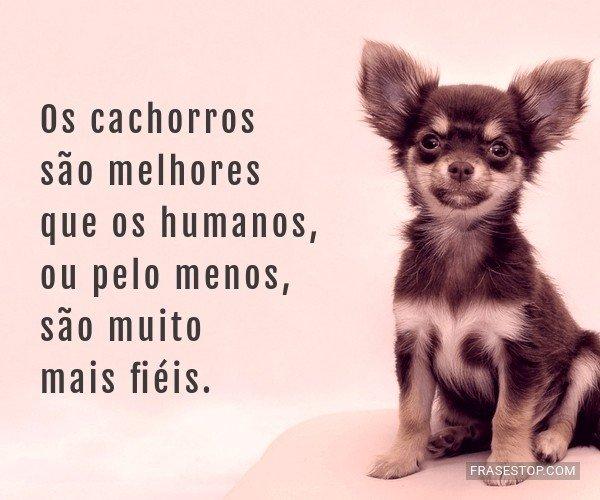 Os cachorros são...