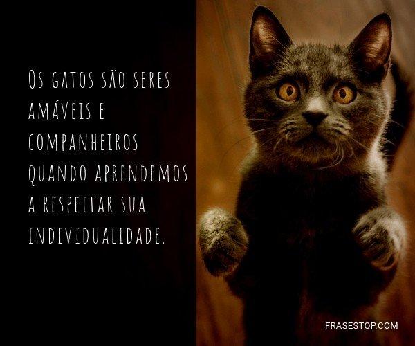 Os gatos são seres...