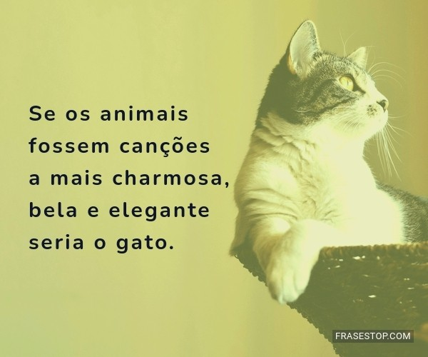 Se os animais fossem...