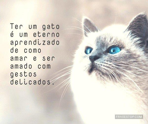 Ter um gato é um eterno...